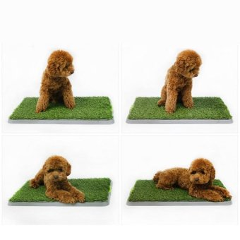 Harga Dog Puppy Training Grass Pads Mat Litter for Pet Plastic Toilet Tray - intl