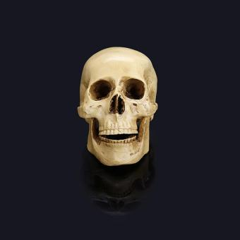 Medical Skull Skeleton Skull Human Skull Halloween Bar HomeDecoration Resin Figurine