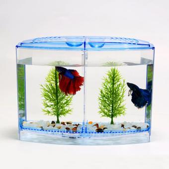 Acrylic Tank for Beta Fish (Blue)