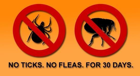 no ticks no fleas